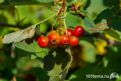 Nikkor_18-140_Nikon_D7100_101tema.ru_Filberd_DOK_5086