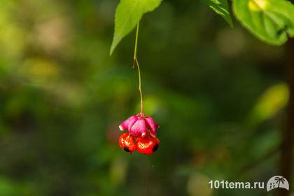 Nikkor_18-140_Nikon_D7100_101tema.ru_Filberd_DOK_5263