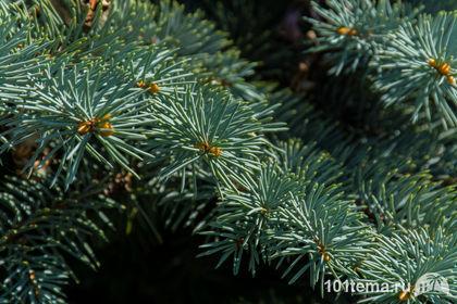 Nikkor_18-140_Nikon_D7100_101tema.ru_Filberd_DOK_5363