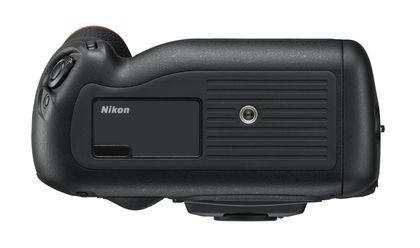 Nikon_D4s_101tema.ru_Filberd_Bottom
